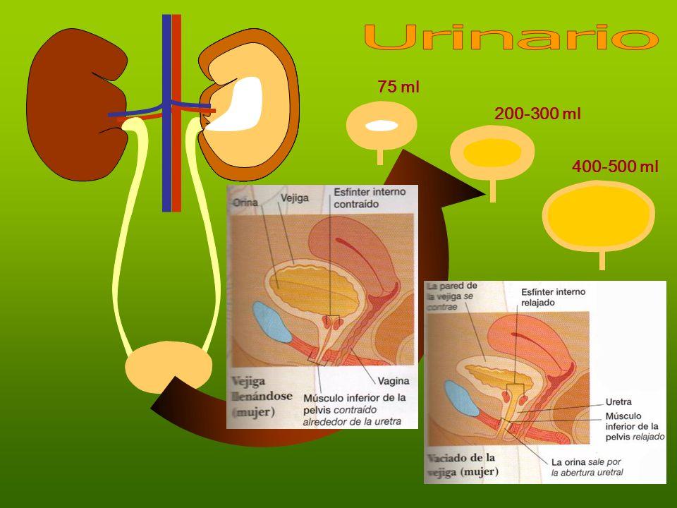 Urinario 75 ml 200-300 ml 400-500 ml