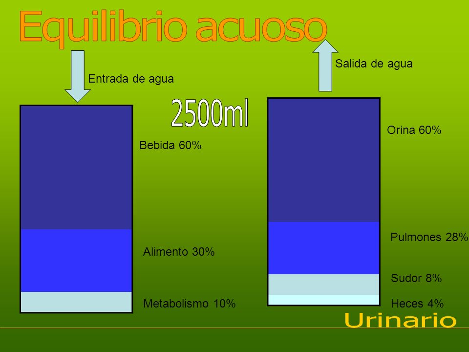 Equilibrio acuoso 2500ml Urinario Salida de agua Entrada de agua