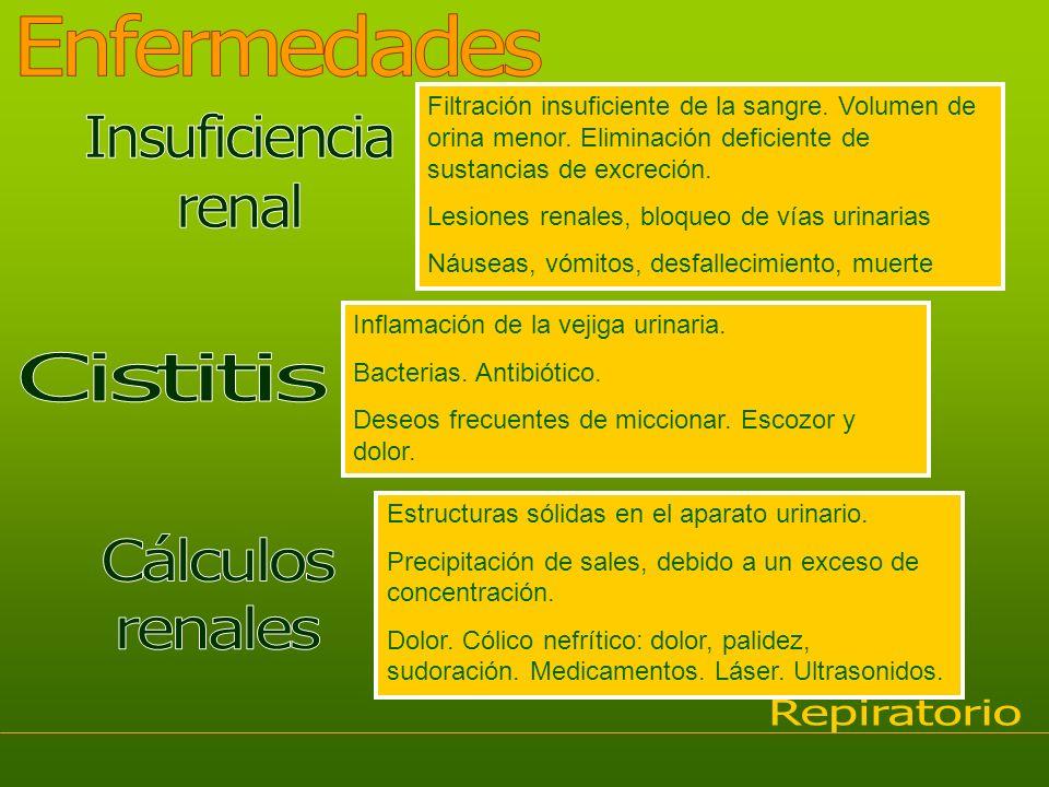 Enfermedades Insuficiencia renal Cistitis Cálculos renales Repiratorio