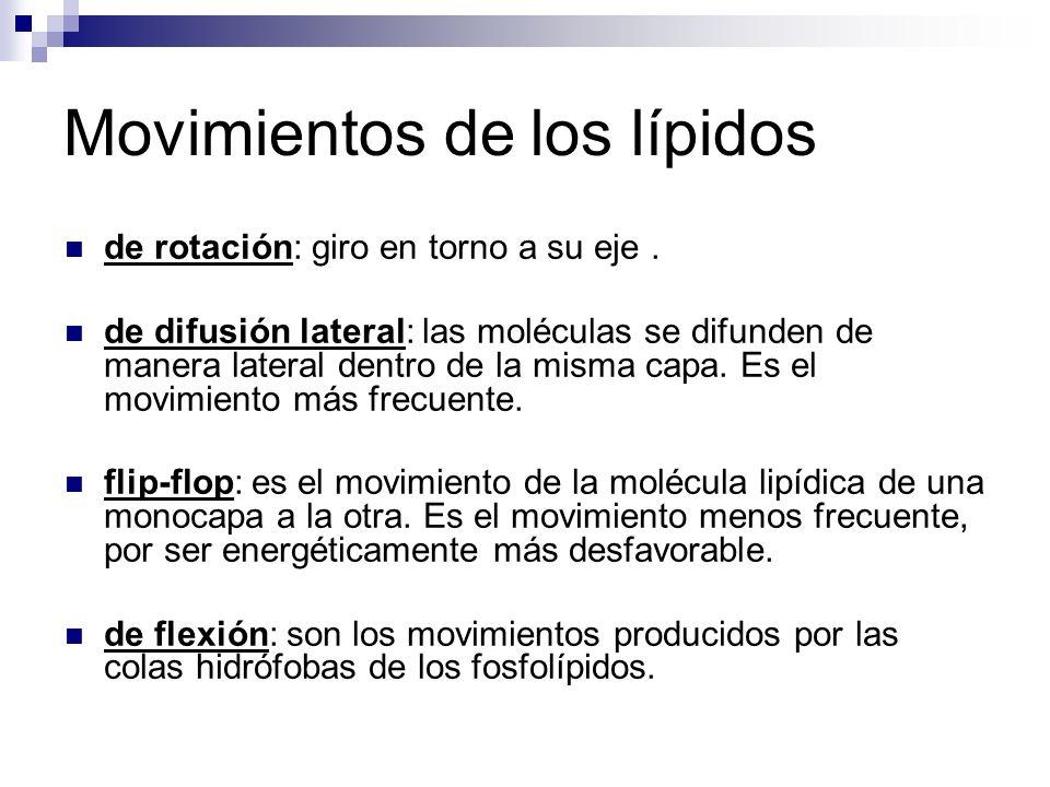 Movimientos de los lípidos