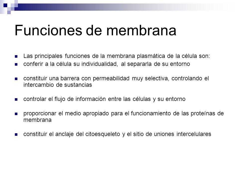 Funciones de membrana Las principales funciones de la membrana plasmática de la célula son: