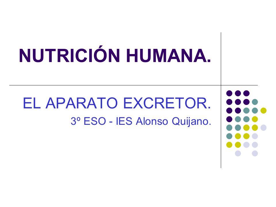 EL APARATO EXCRETOR. 3º ESO - IES Alonso Quijano.