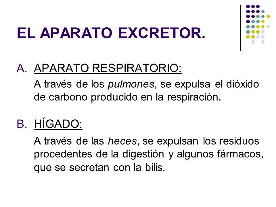 EL APARATO EXCRETOR. APARATO RESPIRATORIO: HÍGADO: