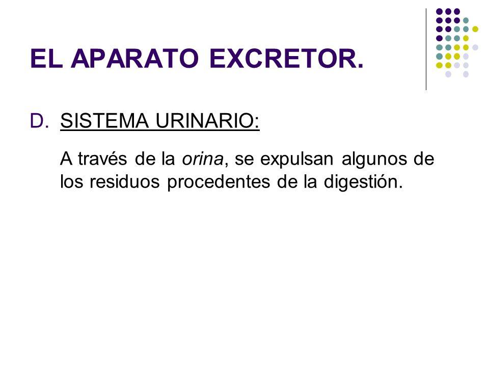 EL APARATO EXCRETOR. SISTEMA URINARIO:
