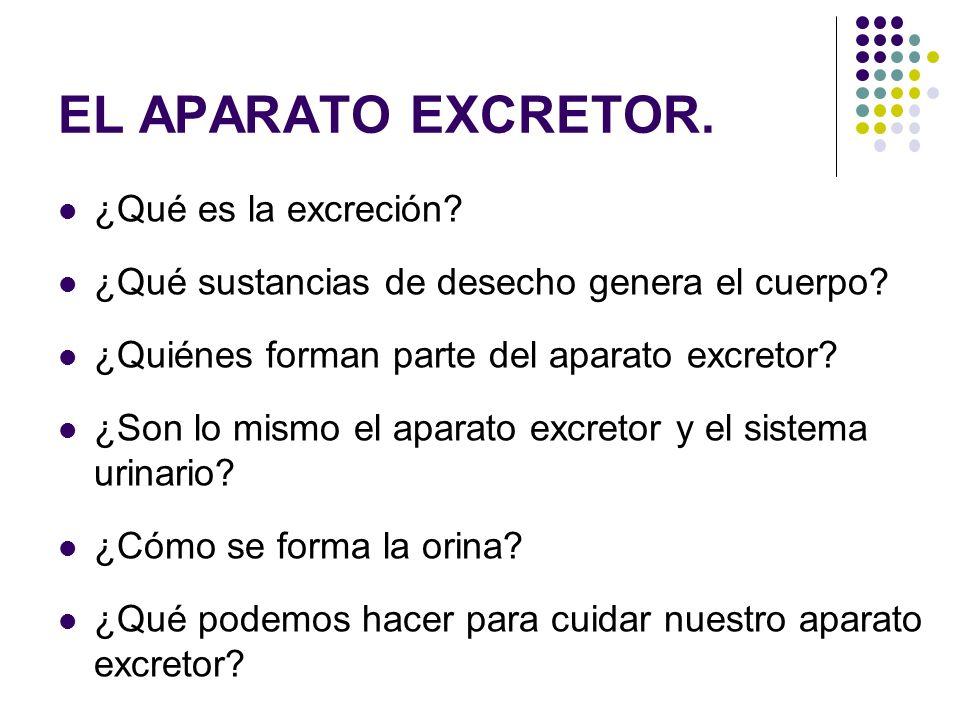 EL APARATO EXCRETOR. ¿Qué es la excreción
