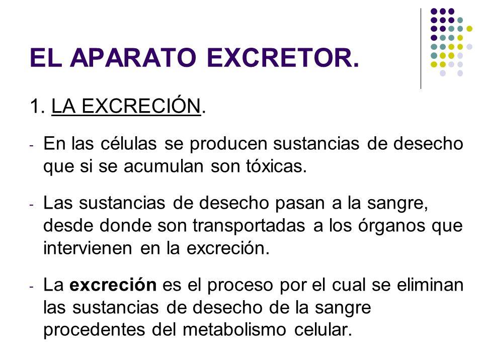 EL APARATO EXCRETOR. 1. LA EXCRECIÓN.