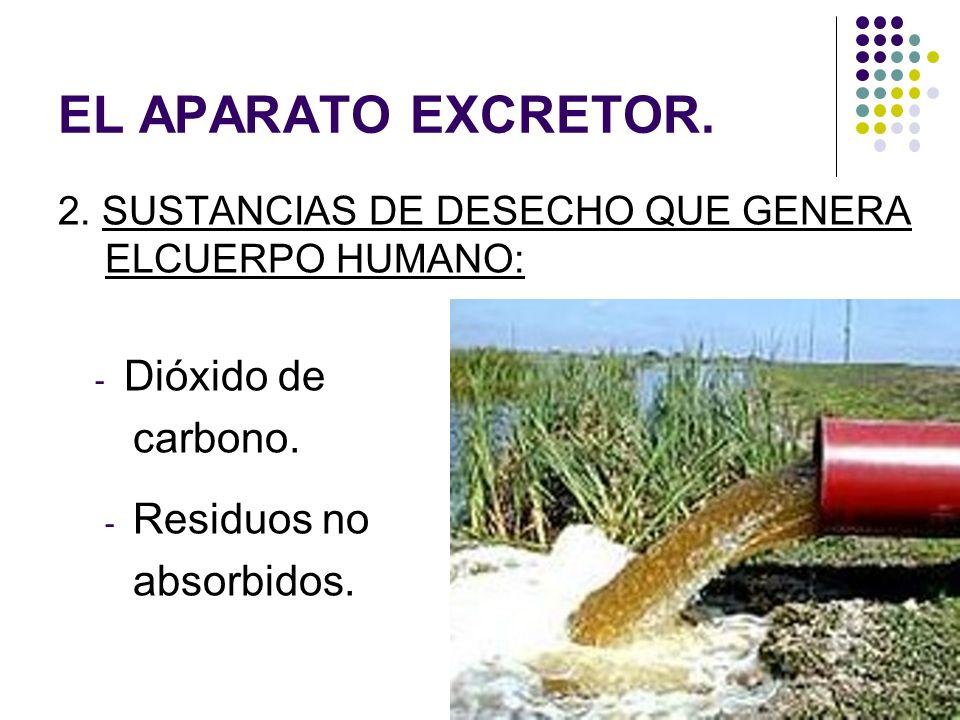 EL APARATO EXCRETOR. Dióxido de carbono. Residuos no absorbidos.