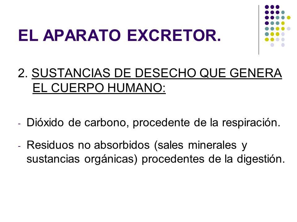 EL APARATO EXCRETOR. 2. SUSTANCIAS DE DESECHO QUE GENERA EL CUERPO HUMANO: Dióxido de carbono, procedente de la respiración.