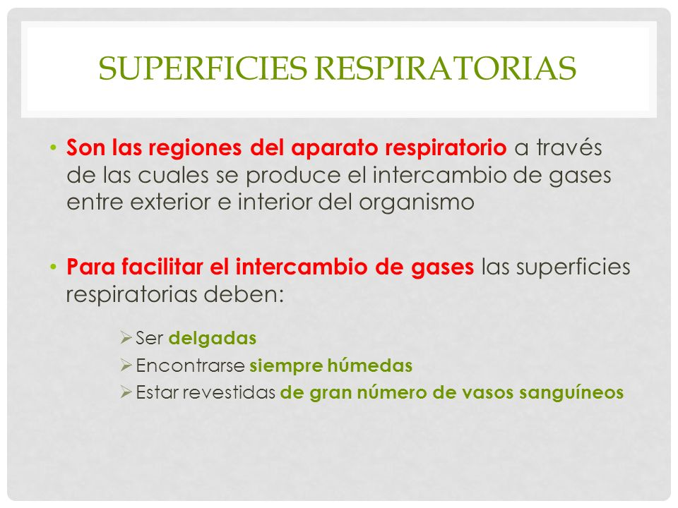 Superficies respiratorias