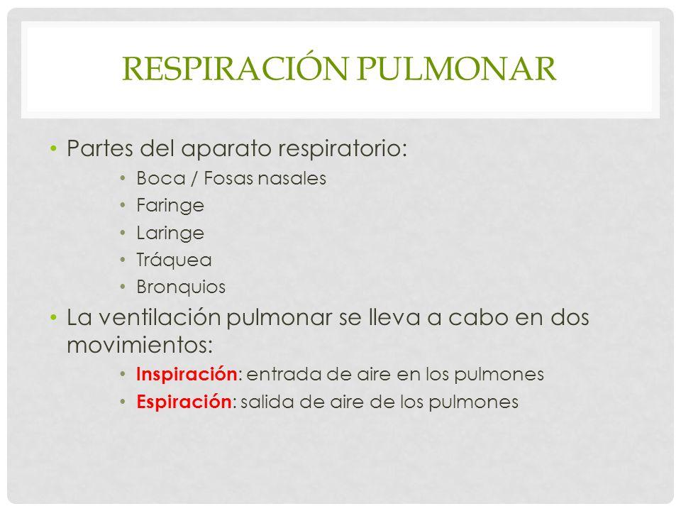 Respiración pulmonar Partes del aparato respiratorio: