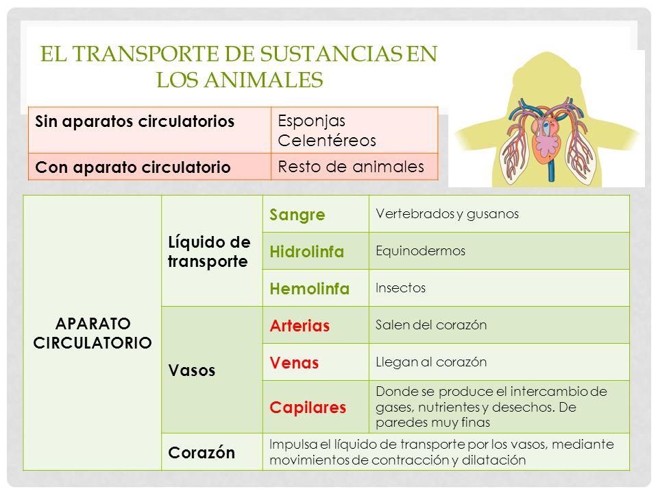 El transporte de sustancias en los animales