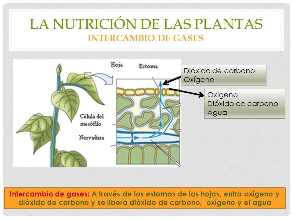 La nutrición de las plantas intercambio de gases
