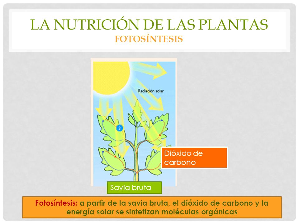 La nutrición de las plantas fotosíntesis