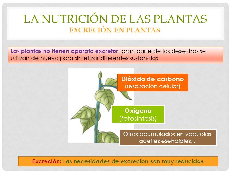 La nutrición de las plantas excreción en plantas