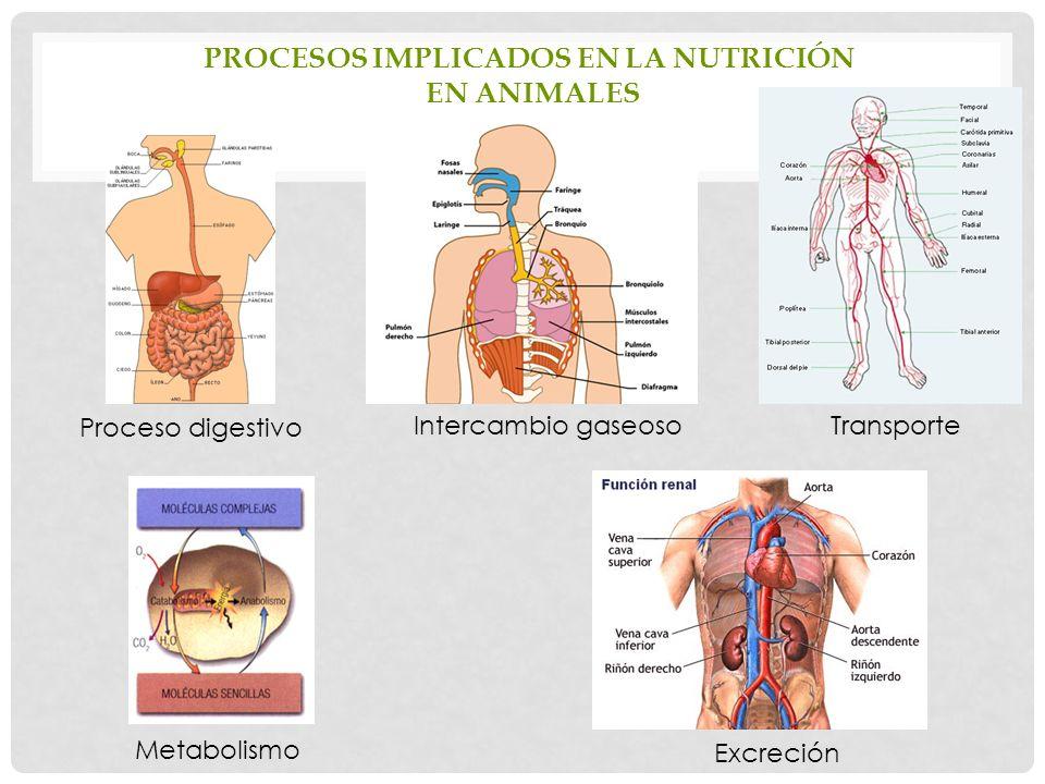 Procesos implicados en la nutrición en animales
