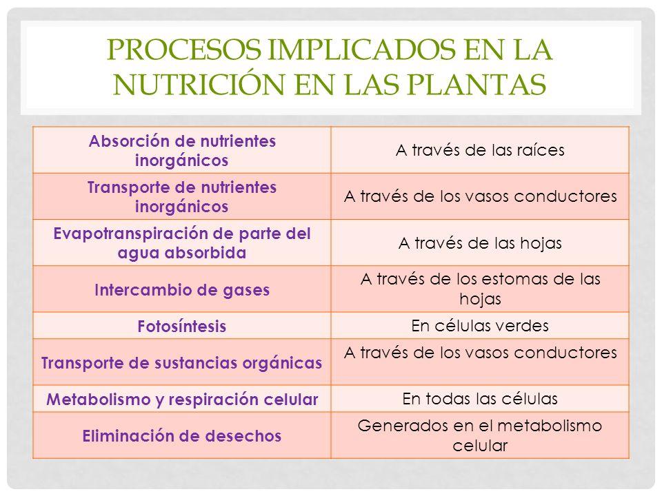 Procesos implicados en la nutrición en las plantas
