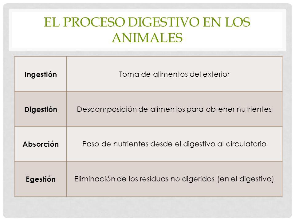 El proceso digestivo en los animales