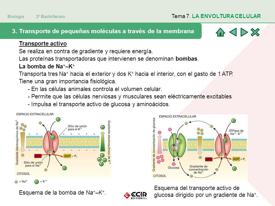 3. Transporte de pequeñas moléculas a través de la membrana