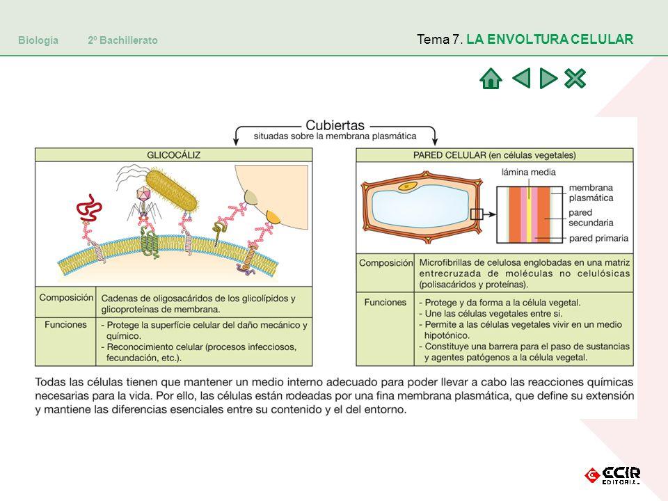 Tema 7. LA ENVOLTURA CELULAR