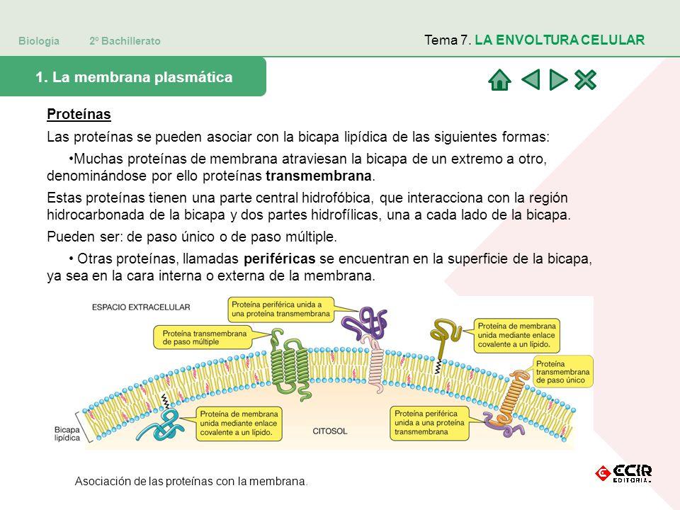 1. La membrana plasmática