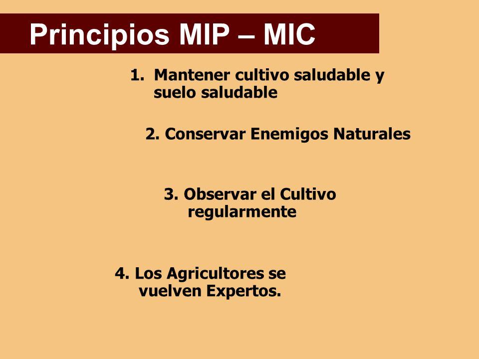 Principios MIP – MIC Mantener cultivo saludable y suelo saludable
