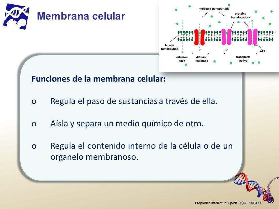 Membrana celular Funciones de la membrana celular: