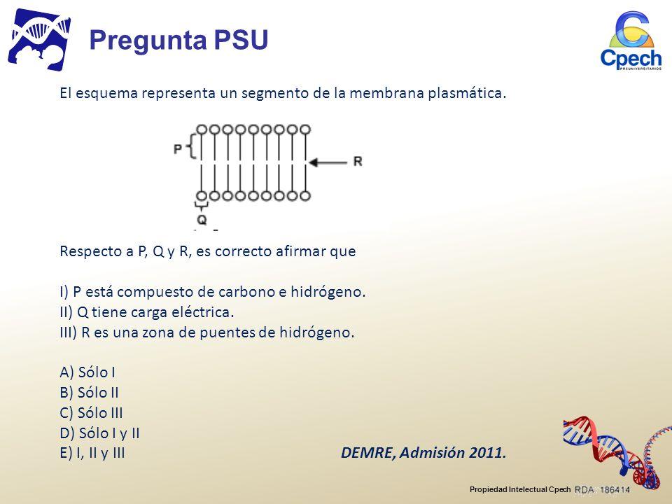 Pregunta PSU El esquema representa un segmento de la membrana plasmática. Respecto a P, Q y R, es correcto afirmar que.