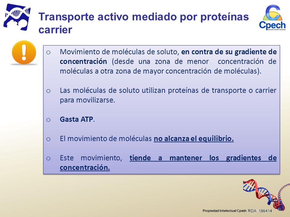 Transporte activo mediado por proteínas carrier