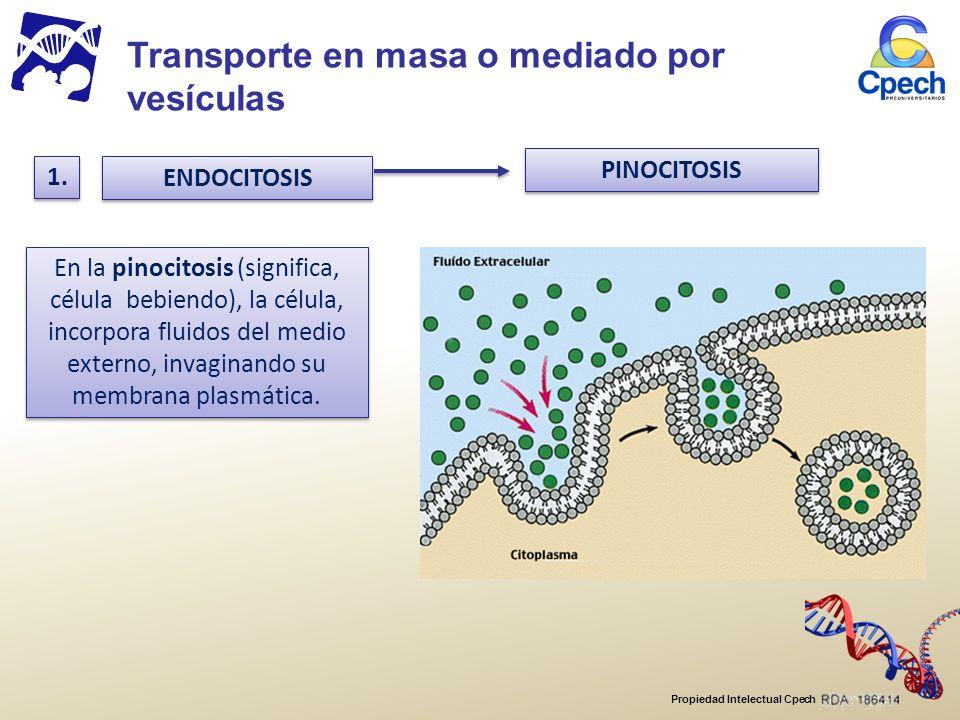 Transporte en masa o mediado por vesículas