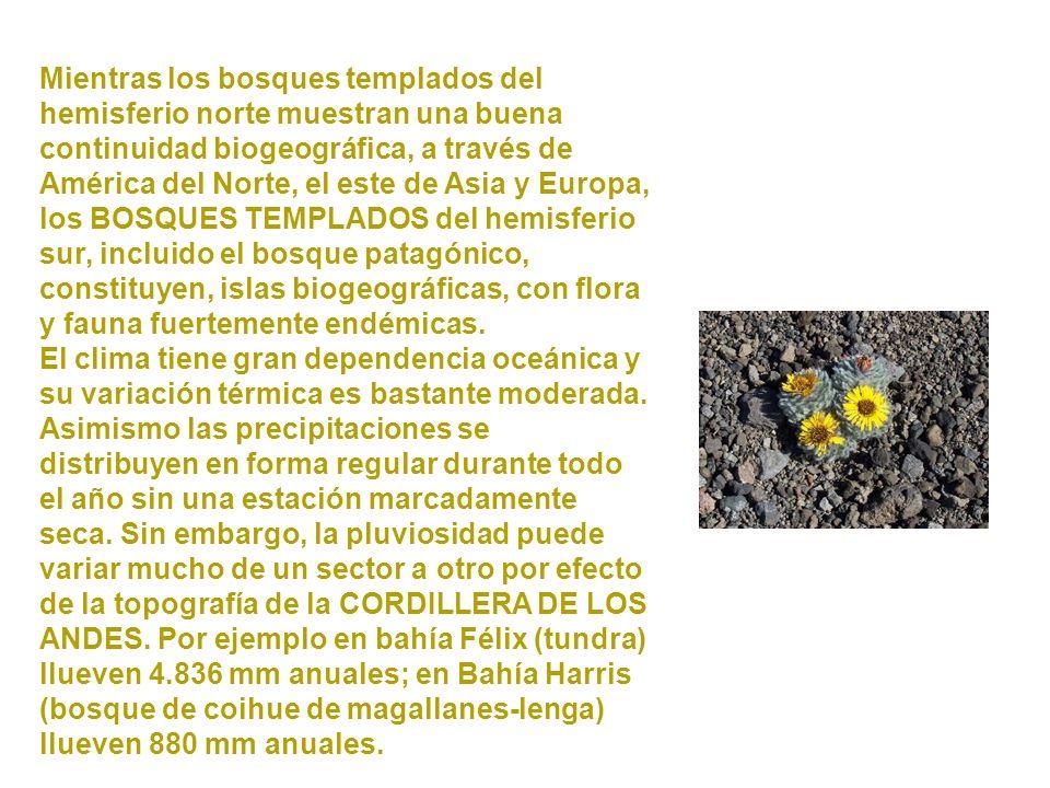Mientras los bosques templados del hemisferio norte muestran una buena continuidad biogeográfica, a través de América del Norte, el este de Asia y Europa, los BOSQUES TEMPLADOS del hemisferio sur, incluido el bosque patagónico, constituyen, islas biogeográficas, con flora y fauna fuertemente endémicas.