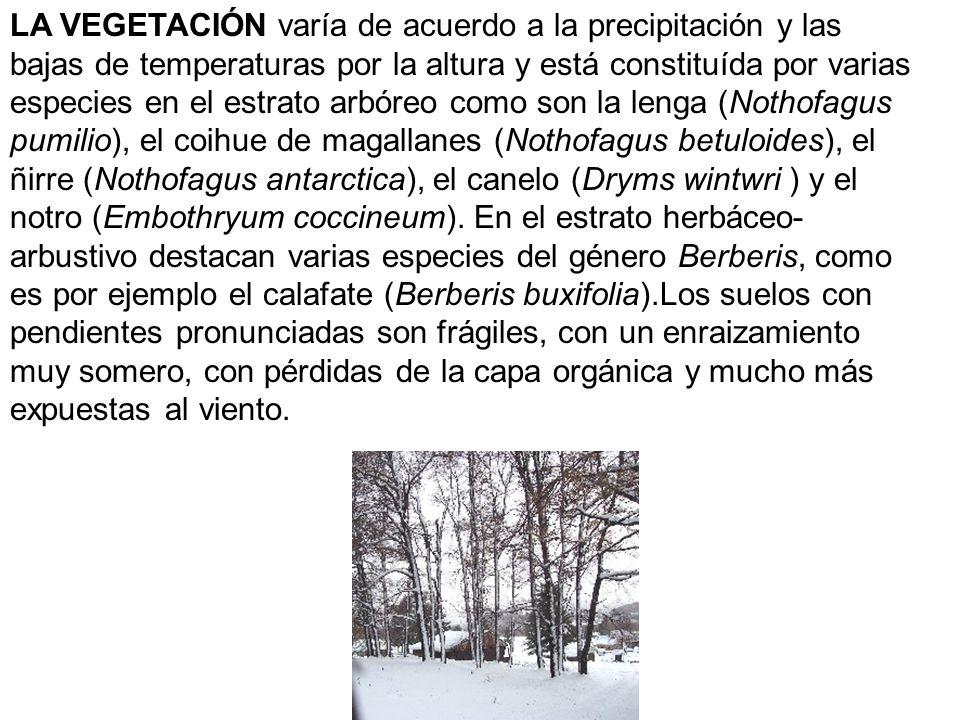 LA VEGETACIÓN varía de acuerdo a la precipitación y las bajas de temperaturas por la altura y está constituída por varias especies en el estrato arbóreo como son la lenga (Nothofagus pumilio), el coihue de magallanes (Nothofagus betuloides), el ñirre (Nothofagus antarctica), el canelo (Dryms wintwri ) y el notro (Embothryum coccineum).
