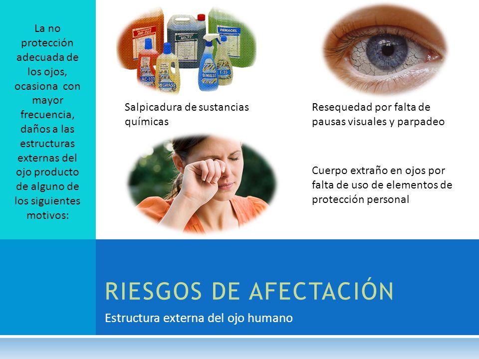 Estructura externa del ojo humano