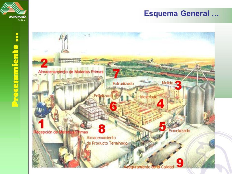 Esquema General … AGRONOMÍA U.C.V. Procesamiento …