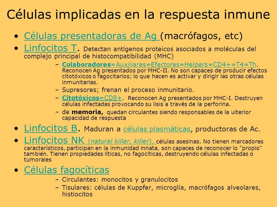 Células implicadas en la respuesta inmune