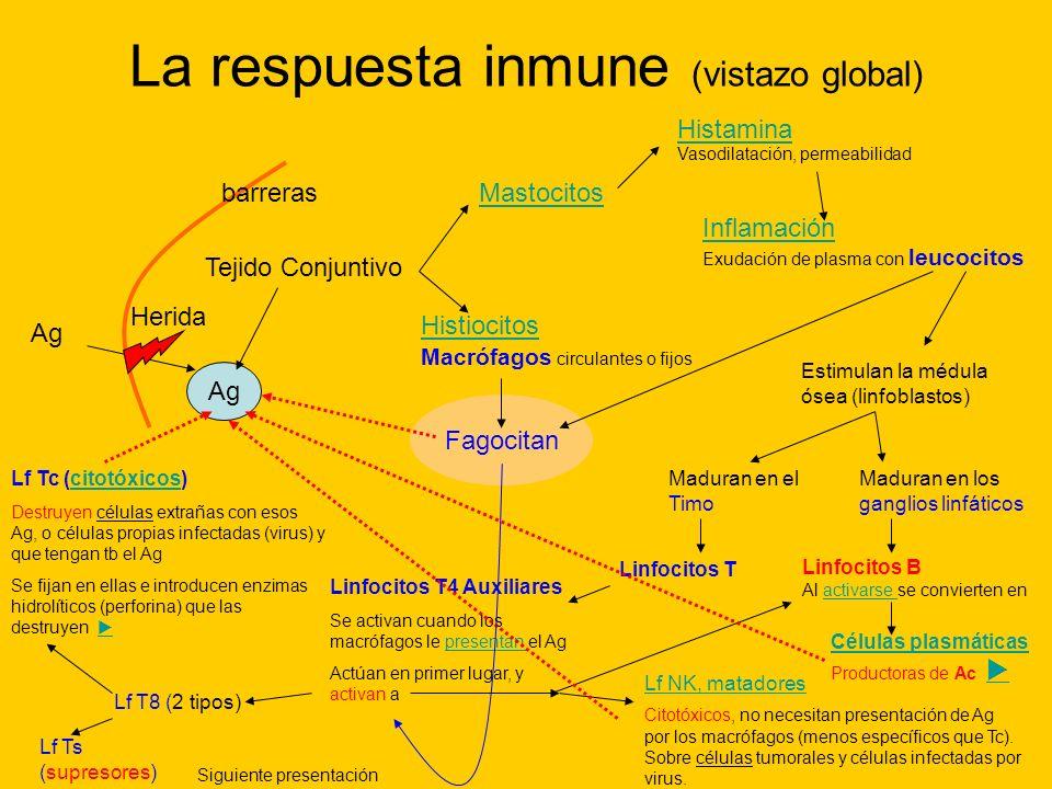 La respuesta inmune (vistazo global)