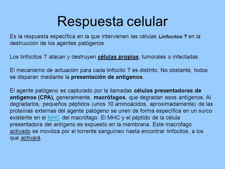 Respuesta celular Es la respuesta específica en la que intervienen las células Linfocitos T en la destrucción de los agentes patógenos.