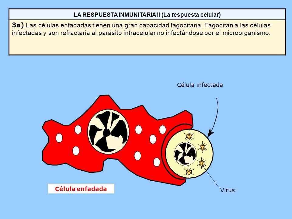 LA RESPUESTA INMUNITARIA II (La respuesta celular)