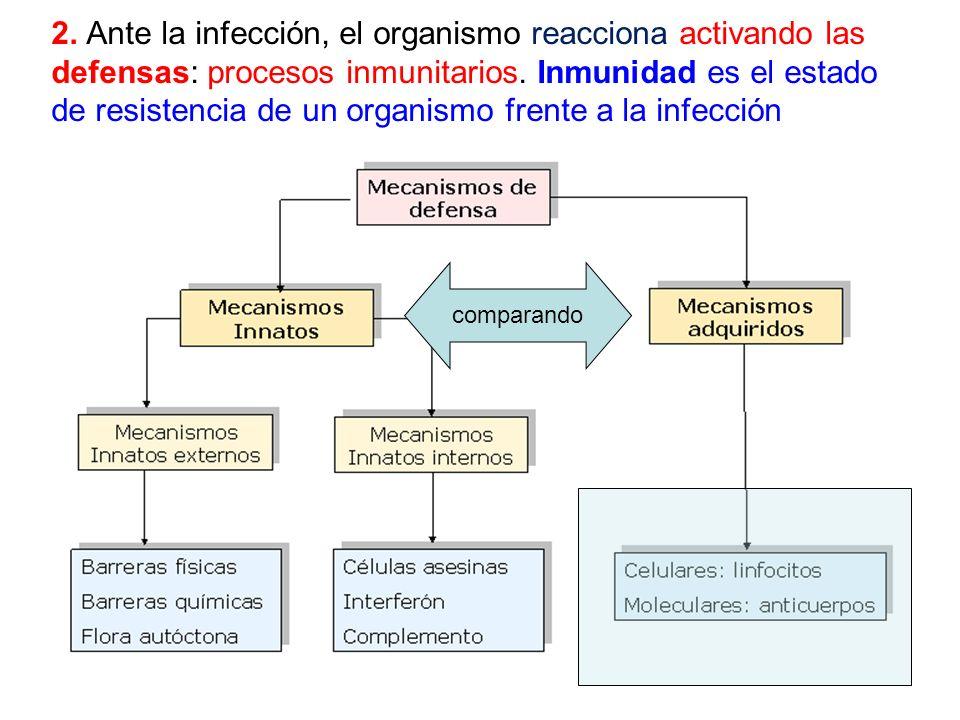 2. Ante la infección, el organismo reacciona activando las defensas: procesos inmunitarios. Inmunidad es el estado de resistencia de un organismo frente a la infección