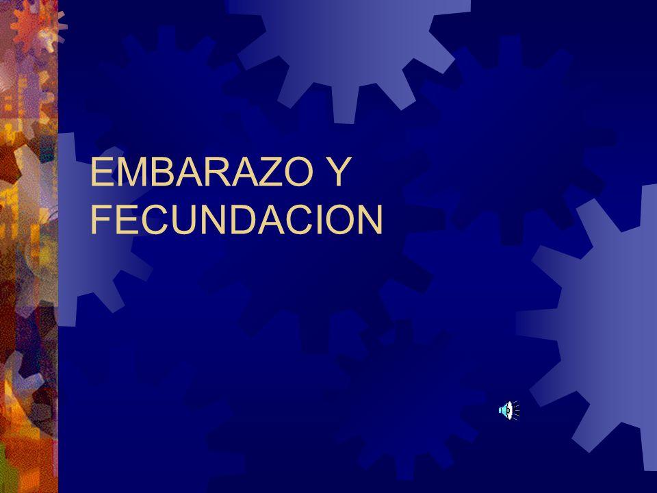 EMBARAZO Y FECUNDACION