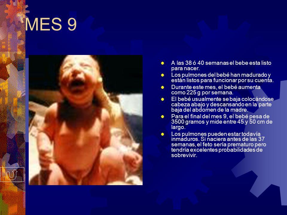 MES 9 A las 38 ó 40 semanas el bebe esta listo para nacer.