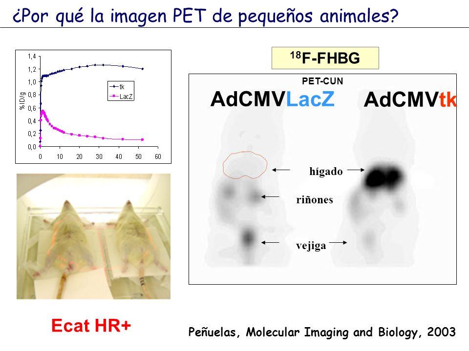 AdCMVLacZ AdCMVtk ¿Por qué la imagen PET de pequeños animales