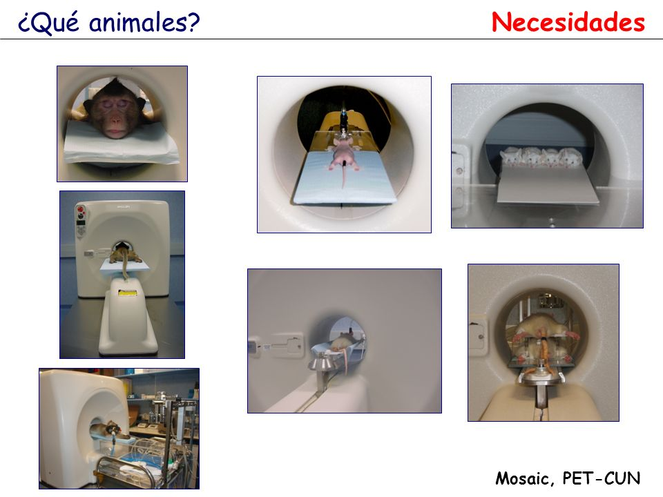 ¿Qué animales Necesidades Mosaic, PET-CUN