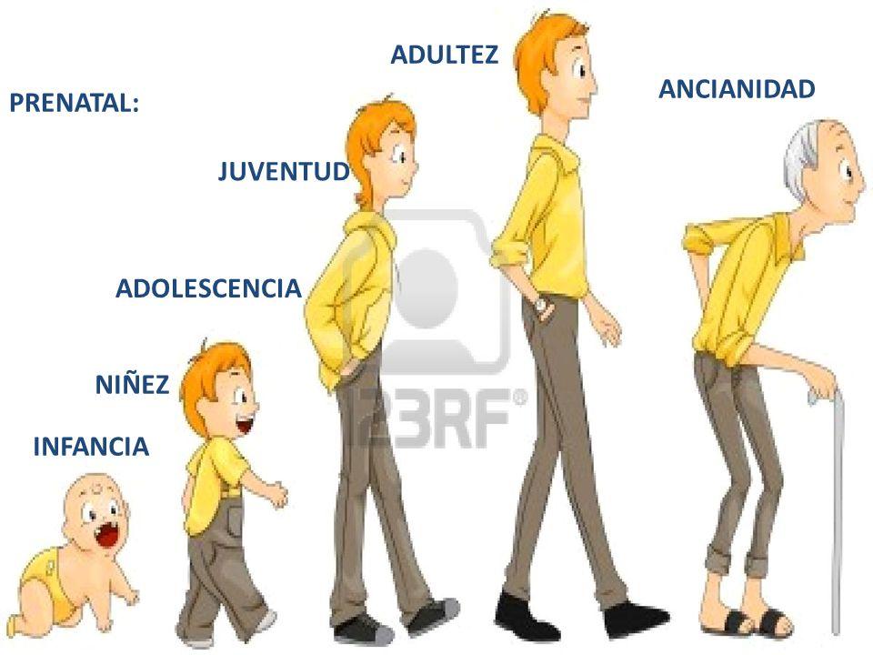 ADULTEZ ANCIANIDAD PRENATAL: JUVENTUD ADOLESCENCIA NIÑEZ INFANCIA