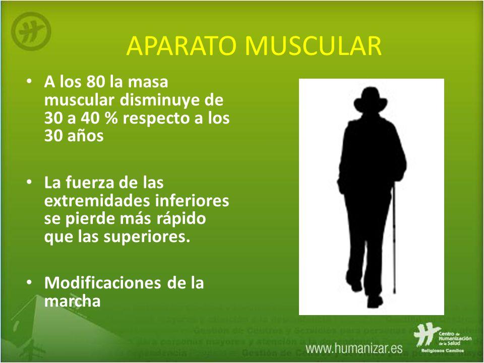 APARATO MUSCULAR A los 80 la masa muscular disminuye de 30 a 40 % respecto a los 30 años.
