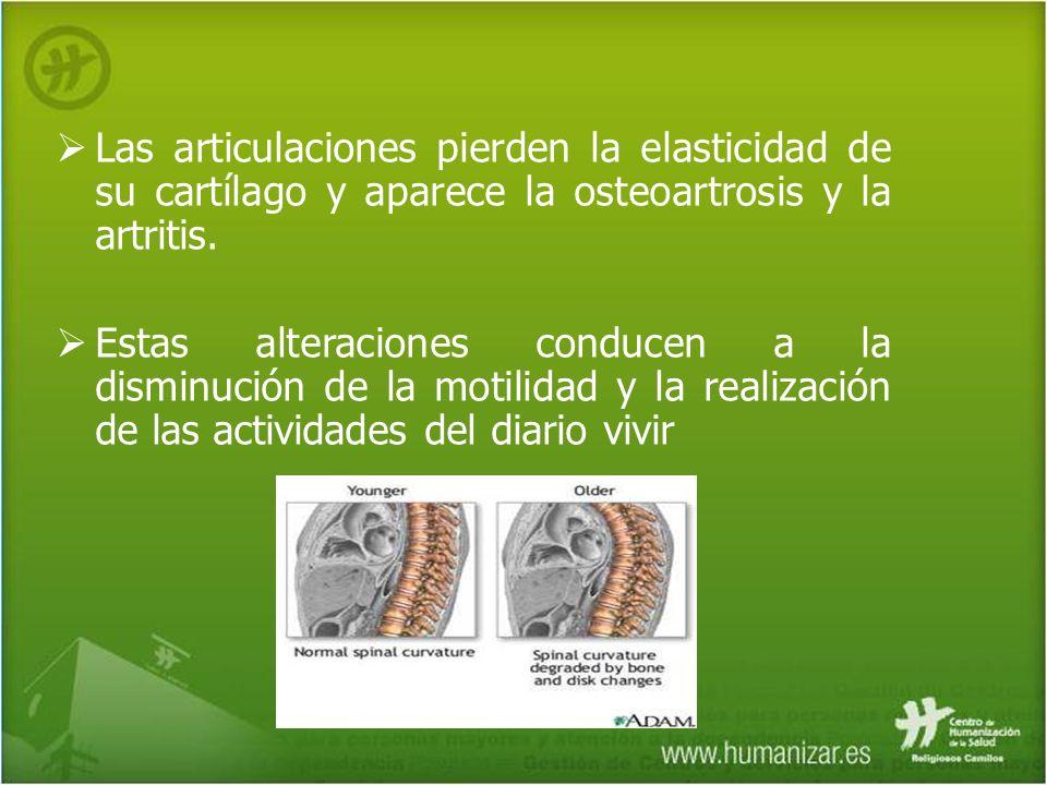 Las articulaciones pierden la elasticidad de su cartílago y aparece la osteoartrosis y la artritis.