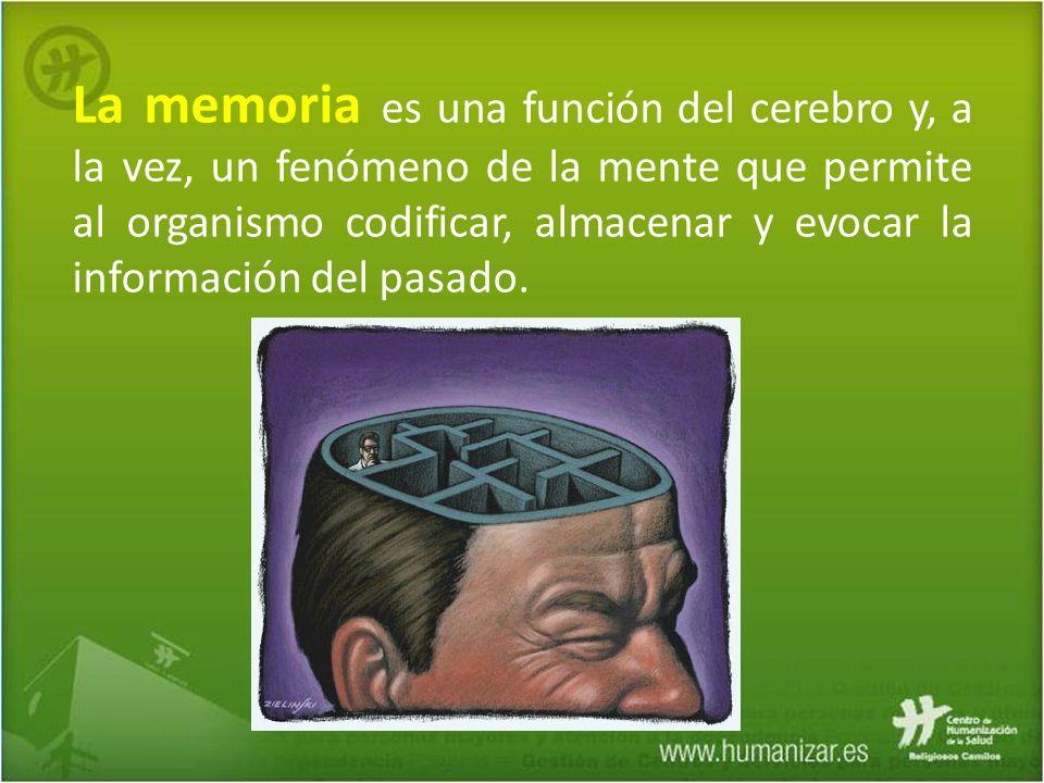 La memoria es una función del cerebro y, a la vez, un fenómeno de la mente que permite al organismo codificar, almacenar y evocar la información del pasado.