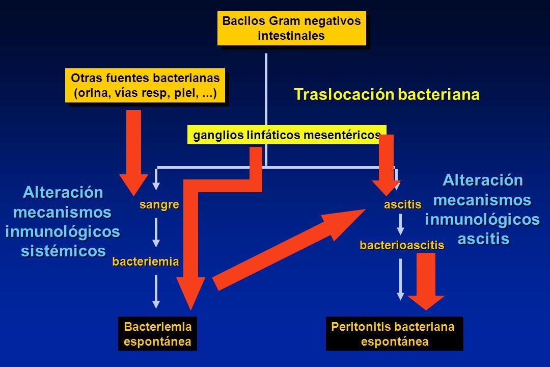 Bacilos Gram negativos Otras fuentes bacterianas