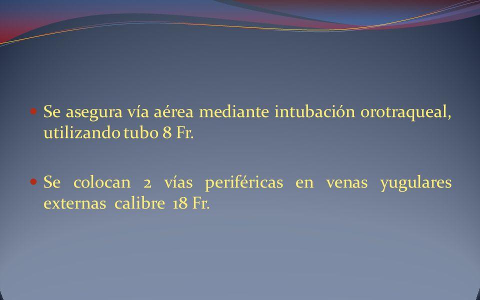 Se asegura vía aérea mediante intubación orotraqueal, utilizando tubo 8 Fr.