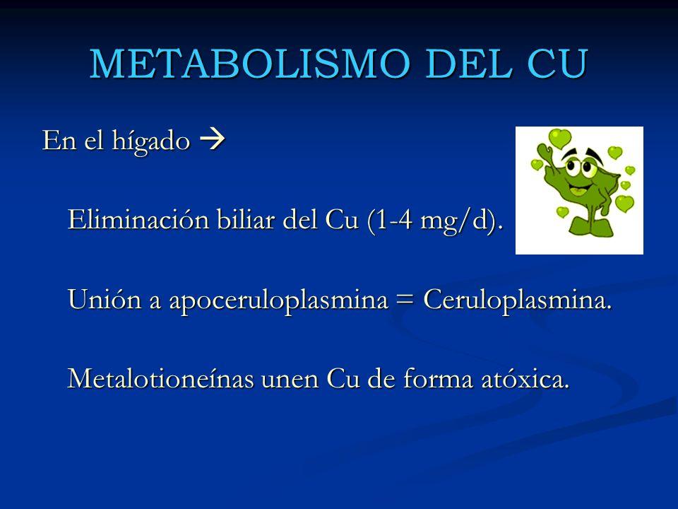 METABOLISMO DEL CU En el hígado 