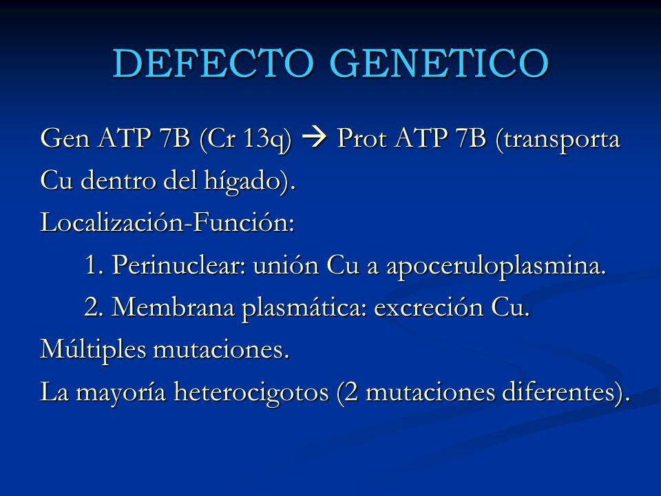 DEFECTO GENETICO Gen ATP 7B (Cr 13q)  Prot ATP 7B (transporta